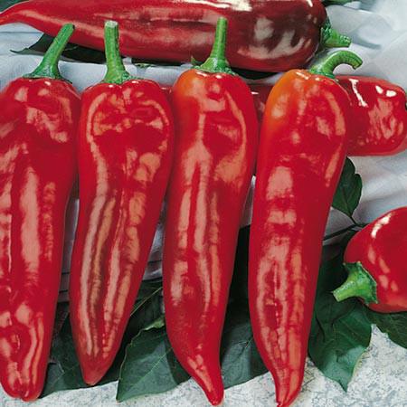paprika-corno
