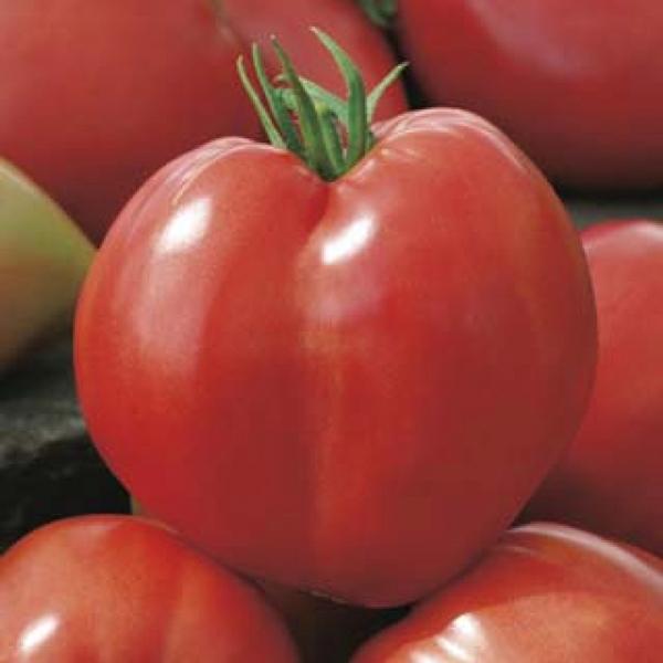 tomat-härjasüda