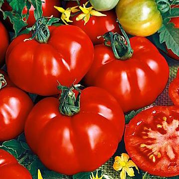 tomat-super-marmande