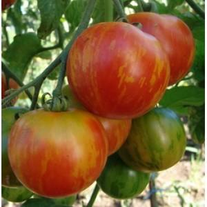 tomat-tigrella