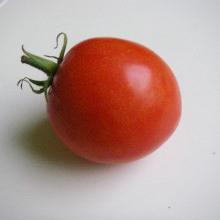 tomat-varto