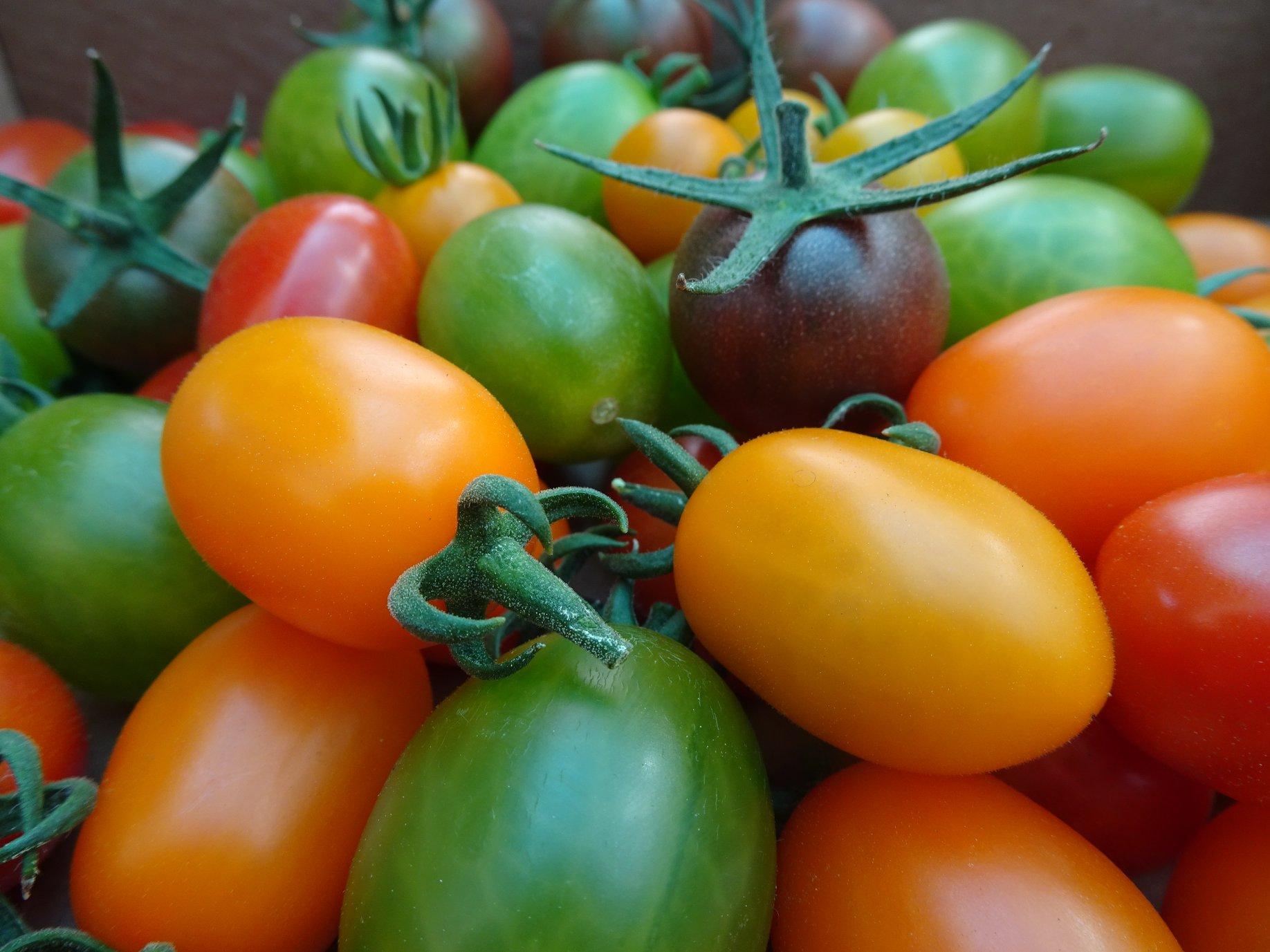 tomativiljad