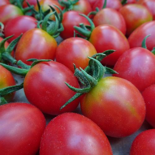 tomat-Malinowy-Kapturek